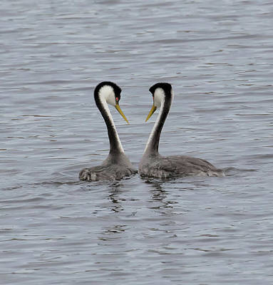 Polaroid Camera - Love Birds by Thomas Kaestner