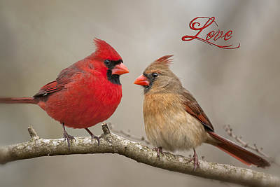 Northern Cardinal Photograph - Love by Bonnie Barry