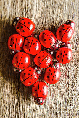 Ladybug Photograph - Love Bug by Jorgo Photography - Wall Art Gallery