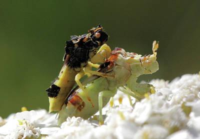 Photograph - Love Bugs by Doris Potter
