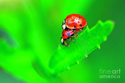 Photograph - Love Bugs by Sharon Talson