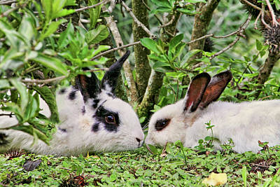 Photograph - Love Bunnies In Costa Rica by Peggy Collins
