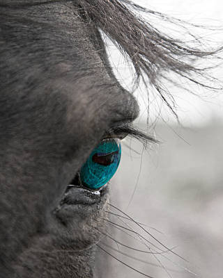 Horse Eye Photograph - Love Does Not Desert  by Betsy Knapp