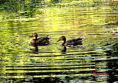 Photograph - Love Ducks by Sadie Reneau