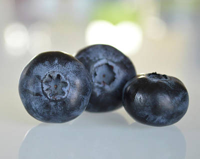 Photograph - Love For Blueberries by Nadine Primeau