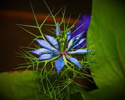 Mixed Media - Love In A Mist by Anthony Seeker