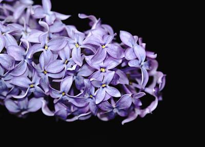 Love In Lilac Art Print