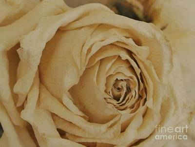 Love Is A Dried Yellow Rose Original by Marsha Heiken