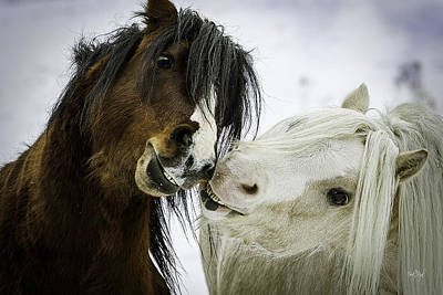 Shetland Ponies Photograph - Love Is Bliss by Everet Regal