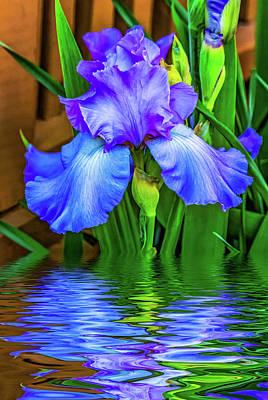 Floral Photograph - Love Is Blue 2 by Steve Harrington