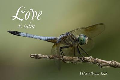 Love Is Calm Art Print