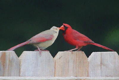 Photograph - Love Is In The Air by Ericamaxine Price