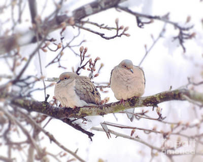 Photograph - Love Is In The Air - Mourning Dove Couple by Kerri Farley