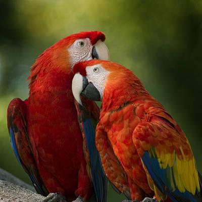 Love  Original by Joseph G Holland