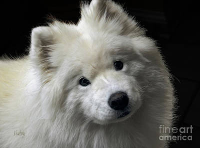 Samoyed Photograph - Love by Lois Bryan