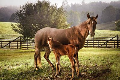 Photograph - Love Me Tender by Debra and Dave Vanderlaan