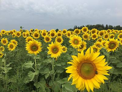 Photograph - Love My Sunflowers by Heidi Moss