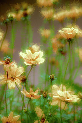 Photograph - Love Of Flowers by John Rivera