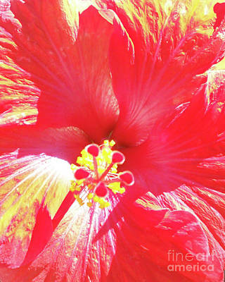 Love Of Hibiscus Art Print