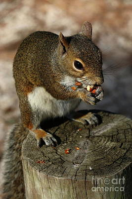 Photograph - Love Peanuts by Christiane Schulze Art And Photography