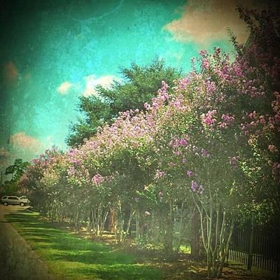 Purple Wall Art - Photograph - Love Purple Crepe Myrtles #allinarow by Joan McCool