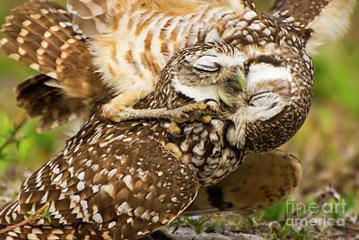 Burrow Owl Photograph - Love by Quinn Sedam