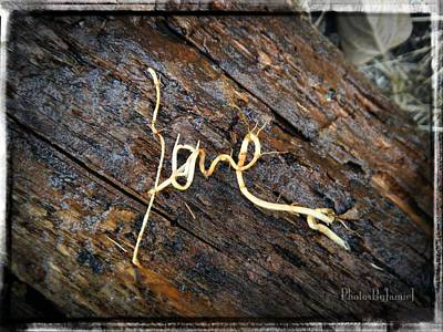 Photograph - Love Roots by Jamie Johnson