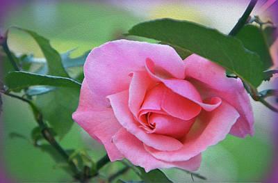 Photograph - Love - Rose by Harsh Malik