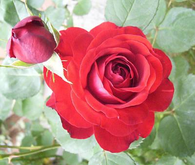 Love Roses Art Print by Lisa Roy