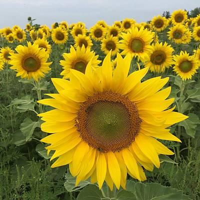Photograph - Love Sunflowers by Heidi Moss