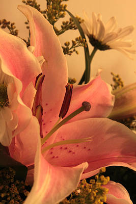 Photograph - Love That Lily by Carolyn Jacob