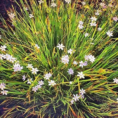 Purple Wall Art - Photograph - Love These Happy Little Flowers by Joan McCool