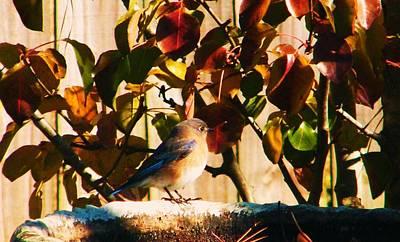 Love To See You Here Colorful Bird Art Print by Nereida Slesarchik Cedeno Wilcoxon