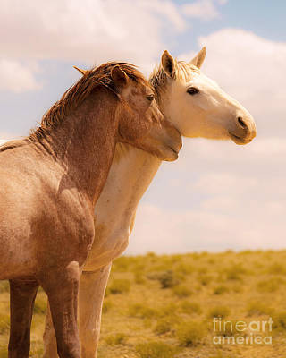 Photograph - Love Wild Horses by Jerry Cowart