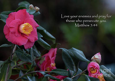Photograph - Love Your Enemies by Dale Powell