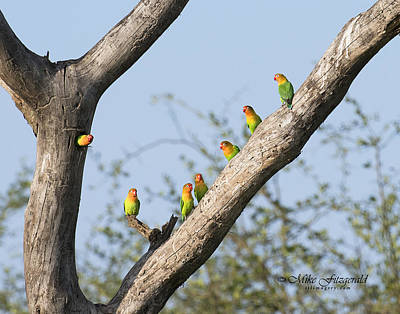 Photograph - Lovebird Tree by Mike Fitzgerald