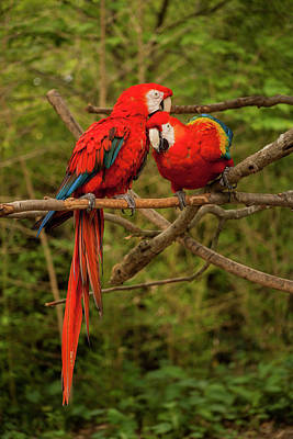 Photograph - Lovebirds by Amy Warr
