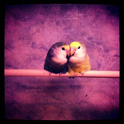 Photograph - Lovebirds by Lora Mercado