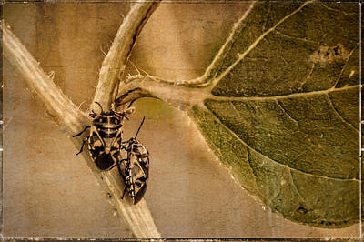 Photograph - Lovebugs by Janice Bennett