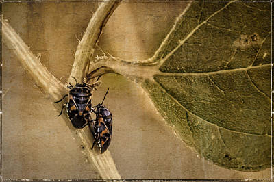 Photograph - Lovebugs Version 2 by Janice Bennett