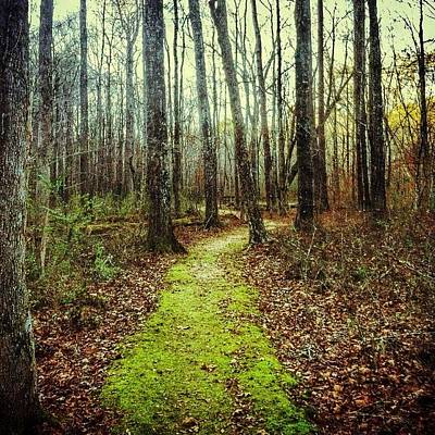 Trail Wall Art - Photograph - Loved This Moss Covered Path #explore by Joan McCool