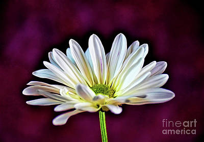 Photograph - Lovely 1-11 by Ray Shrewsberry
