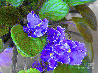 Photograph - Lovely African Violets by Merton Allen