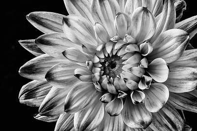 Chip Photograph - Lovely Black And White Dahlia by Garry Gay