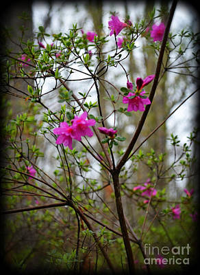 Photograph - Lovely Bright Pink Flowers by Eva Thomas