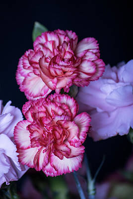 Photograph - Lovely Carnation Flowers by Ester Rogers