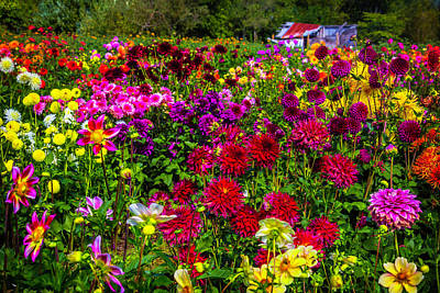 Shed Photograph - Lovely Dahlia Garden by Garry Gay