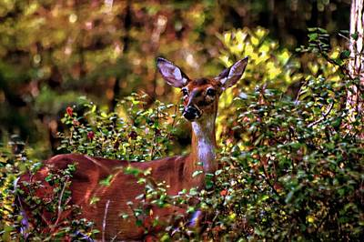 Photograph - Lovely Doe by Sheri McLeroy
