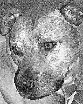 Pitbull Drawing - Lovely Dog by Lucia Sirna