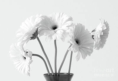 Photograph - Lovely Gerberas by Anita Oakley